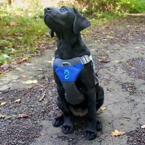 Mountain Paws Dog Harness Modrý Image 2